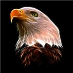 American Bald Eagle Head