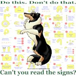 Can't You Read:Collie Tricolor