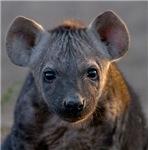 Hyena Baby Portrait