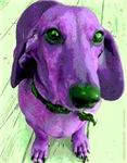 Purple People Greeter Dachshund