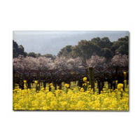 Wine Country Mustard Photography Magnets
