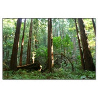 San Francisco Bay Area Redwood Trees + Redwoods