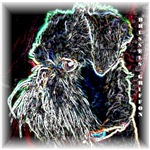 Brussels Griffon Design