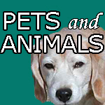 Pets, Animals, Funny Dog & Cat Stickers