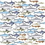School of Sharks 1
