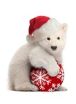 NEW! Polar Bear Cub Cards and Gifts