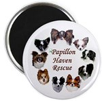 Papillon Magnets