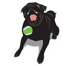 Black Pug Lunging