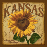 Kansas Sunflower (Aged)