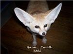 Go on.. I'm All Ears