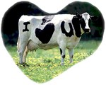 I Love You Cow