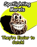 Spotlight Morels
