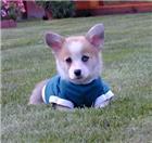 Puppy Breath!