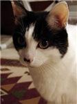 Feline Quotables