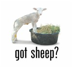 Got Sheep?