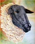 Suffolk Ewe In Profile