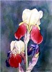 Iris Profiles
