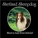 Bred To Lead Sheltie #2