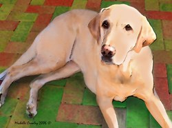 Watercolor Pet Designs