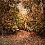 Beginning the Journey Fall Landscape