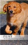 PLAY Inspirational Golden Retriever Puppy