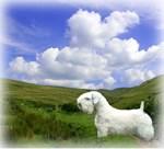 Sealyham Terrier Shop