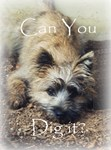 Holy Terrier Greeting Cards