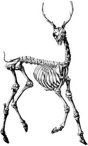 Gothic Prancing Deer Skeleton