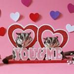 Valentine's Day #9