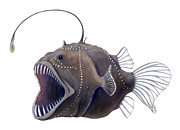 Deepsea Anglerfish