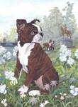 Boston Terrier brindle