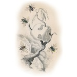 Vintage Bee Nest Illustration