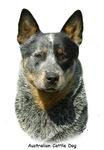 Australian Cattle Dog 9F061D-04
