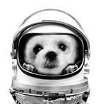 Shih Tzu in space