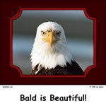 Bald is Beautiful! Collection