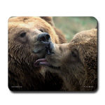 Bear Mouse Pads