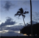 Maui Inspirations