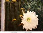 Desert Beauty by Estela R. Rodriguez