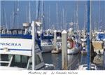 Monterey 08' by Amanda Nelson