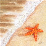 Starfish Vacation