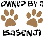 Owned By A Basenji