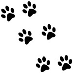 Paw Prints - Various Colors & Styles
