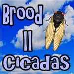 Brood II Sky Cicadas
