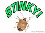 Stink Bug Stinky