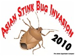 Stink Bug Invasion