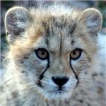 Cheetah Products
