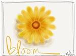 Bloom Daisy