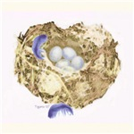 Bluebird's Nest