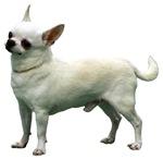 Koirat - Dogs
