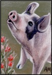 ANIMALS - LITTLE SINGING PIG ( PIGLET )